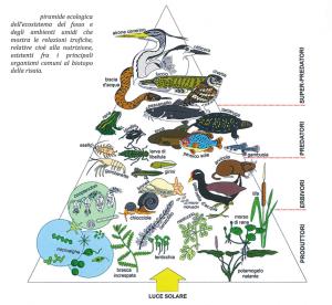 """La Piramide ecologica riscontrabile nell'ambiente dove pratica la coltivazione del Riso a Grumolo delle Abbadesse, tratto dal libro """"Grumolo, studio sull'evoluzione del territorio di Matteo Barban"""""""