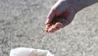 Tradizione e coltivazione del Riso di Grumolo delle Abbadesse