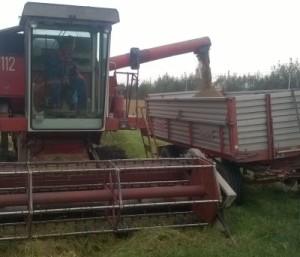 Trebbiatura con mezzi meccanici del riso di Grumolo delle Abbadesse Vialone Nano