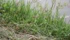 La libellula rossa, simbolo del nostro Riso Natura, è un bioindicatore significativo per la nostra risaia di Grumolo delle Abbadesse